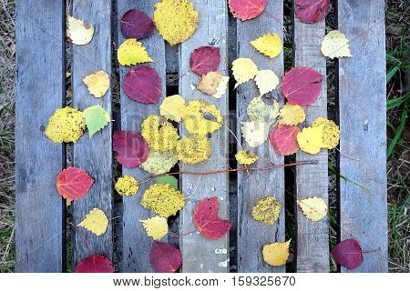 Still-life with many colorful fallen leaves fallen leaves on old vintage wooden table with vertical planks top view outdoor close-up