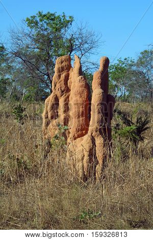 Termite hill in the Outback of Australia