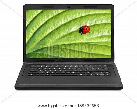Ladybug on laptop screen isolated on white background on laptop screen isolated on white background
