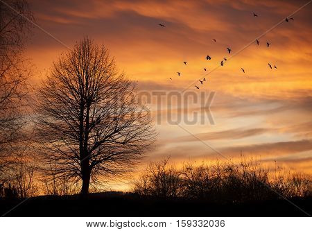 Tree in sunset time with flying birds. poster