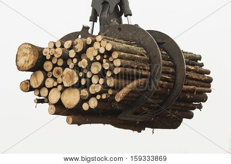 Heavy lifting crane loading cut wooden logs