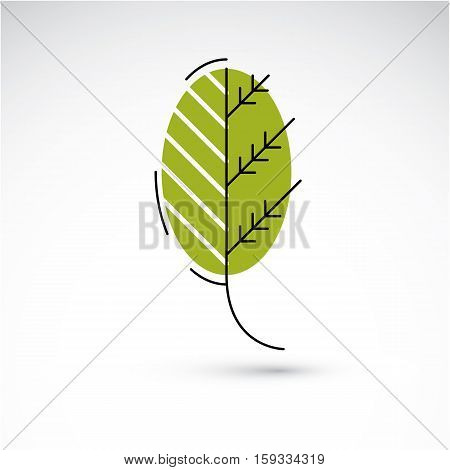 Vector Illustration Of Green Alder Tree Leaf Isolated On White Background. Simple Drawn Nature Desig