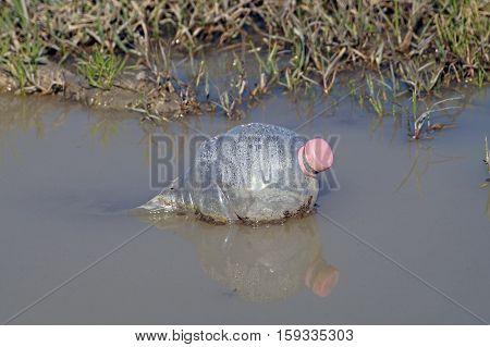 A debris plastic bottle floating in the pond.