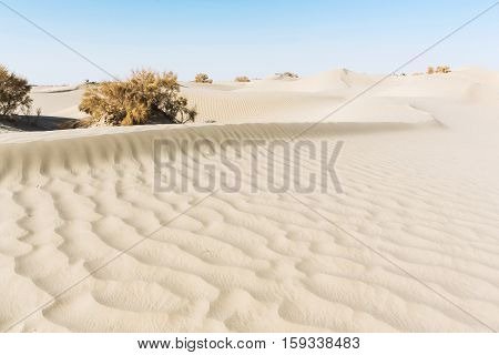 brown plants in empty desert with blue sky