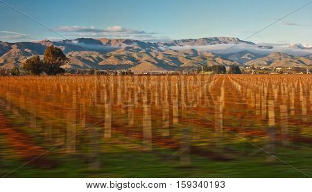 Lovely view of wineyard countryside of South Island of New Zealand