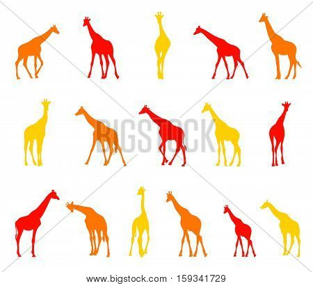 Collection of silhouettes of giraffes. Illustration of African animals isolated on white background.