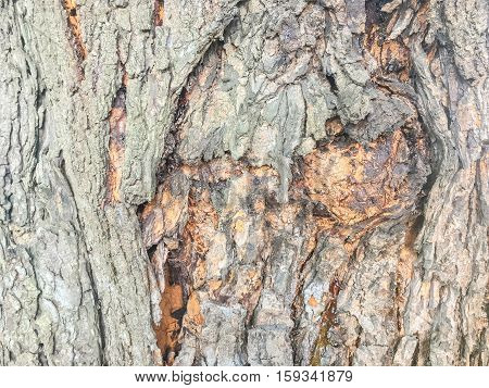 Closeup surface wood pattern at old cracked skin of trunk of tree texture background