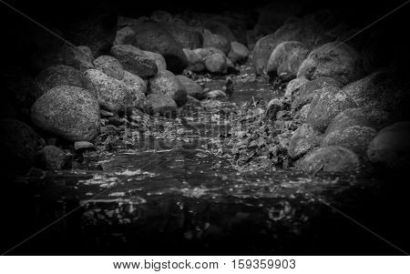 A dark water spring is running towards the camera