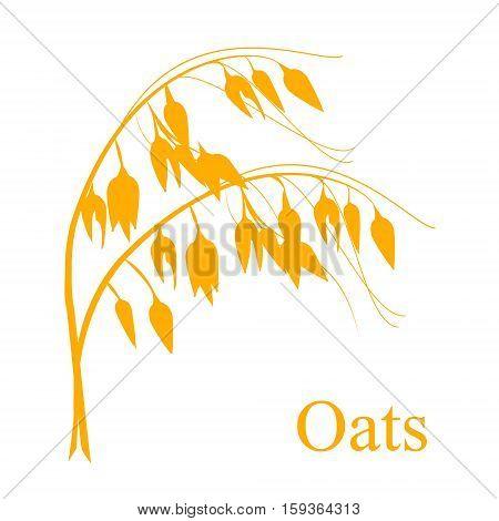 Oat Cereals Vector