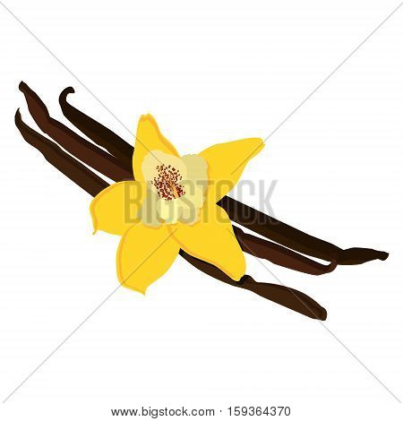 Vanilla Flower Vector