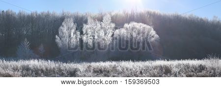 Winter Christmas background. Morning sun illuminate white frosty trees. Frosty winter landscape with lens flare.