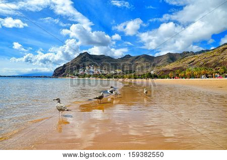 Playa De Las Teresitas Near Santa Cruz De Tenerife. Yellow Sand Beach In The North Of Tenerife.