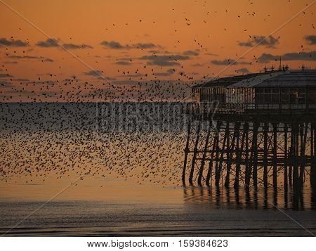 Starlings  in flight at dusk at North pier,Blackpool,Lancashire,UK
