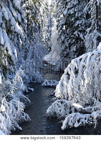 Salt Creek on the Willamette Pass in Oregon winds through trees covered with fresh snow while the morning snn begins to shine throngh their canopy.
