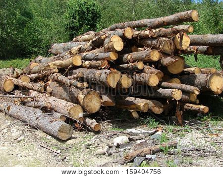 A stack of logs ready to be cut for fire wood.