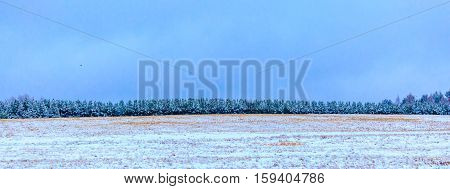 Panoramic photo of pine trees in snow.