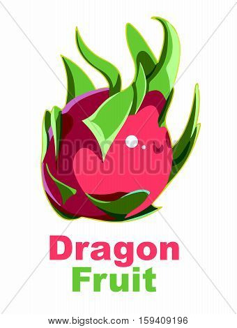 Vector Artistic Drawing of Dragon Fruit, Pitaya isolated on white background