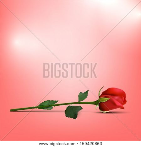 Red rose on shiny pink background with place for text - vector illustration