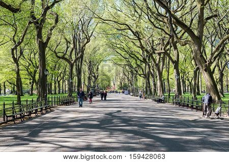 NEW YORK, USA - MAY 5, 2014: people walk in Central Park in spring time, New york, USA