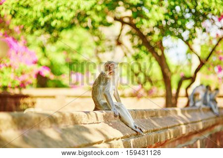 Monkey Sitting On The Wall In A Balinese Temple