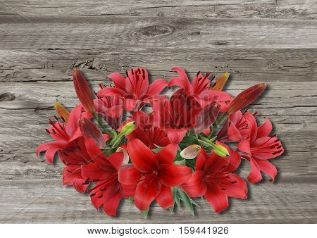 Lily On Old Wooden Boarderes