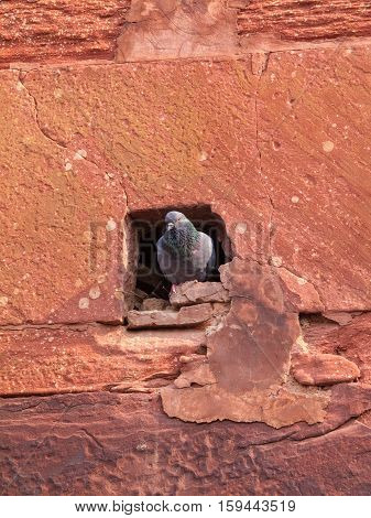 Pigeon Hole In Agra Fort