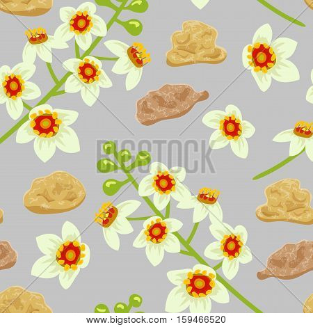Frankincense blossoming flower seamless pattern vector. Beautiful boswellia tree flowers with incense bits on grey background. For greetings and textile prints decoration.
