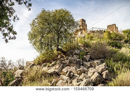 The tree on a hill crooked tree on a hillside between the stone ruins of the old fortress in Upper Galilee Israel