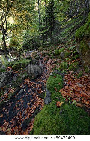 Stara reka Reserve in the autumn, Stara planina mountain, Bulgaria