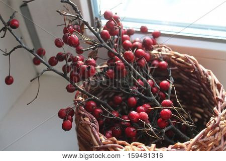 branch of hawthorn with ripe deep red berries full of healthy vitamin juice stay in willow basket