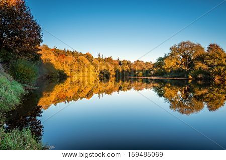 Alder Wood reflected in River Tyne, which is near Ovington, in Northumberland, seen here reflected in a slow moving section of the River Tyne in autumn