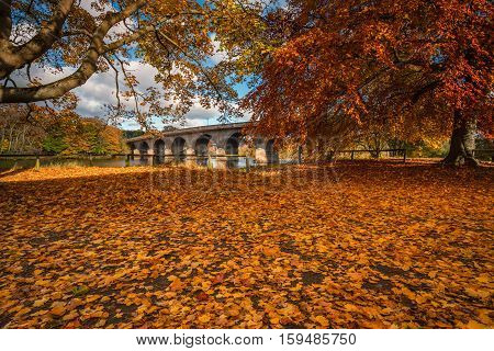 Autumn Leaves and Hexham Bridge, in its full glory of colour at Tyne Green Riverside Park Hexham, Northumberland with Hexham Road Bridge over the River Tyne