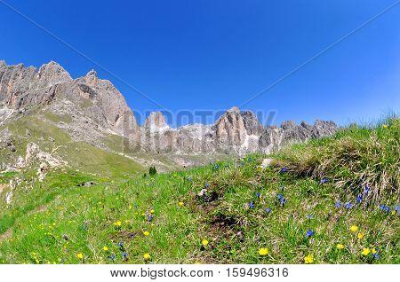 Flowers on mountain meadow, Valle del Vajolet in Dolomites,Italien Alps