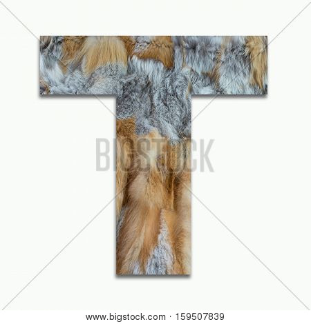 T red fox fur in a font trained