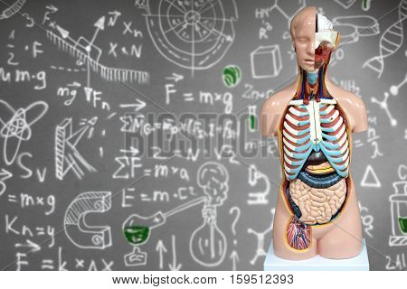 Human anatomy mannequin on the background of chemical formulas. The arrangement of human organs