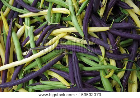 Mixed yellow purple green raw string bean pile view from above