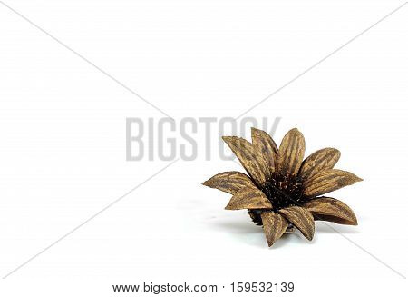 dry flower for white background Dried flowers for decoration Dry plant that it have flower blooming very beautiful before.Brown flower pattern