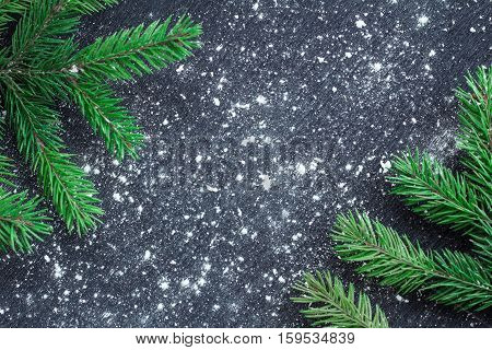 Green Christmas Tree Branches On Winter Snowbound Black Space Background