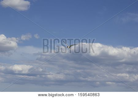 blue sky with clouds and a seagull with a red beak