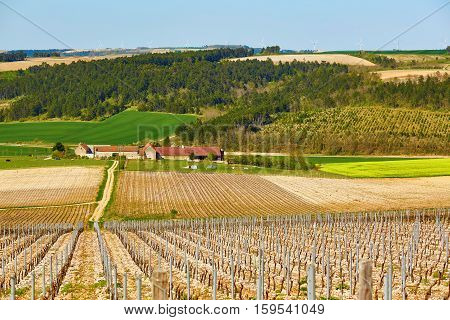 Beautiful Wineyards In Burgundy