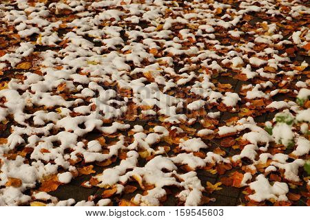 Colorful autumn leaves lying on the ground