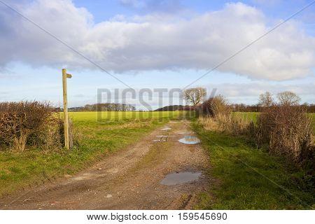 Bridleway In Autumn