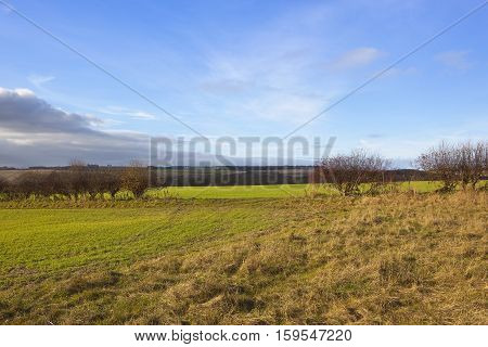 Hedgerow Gap With Scenery