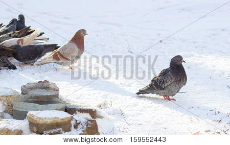 Urban birds in the park in winter is our feathered friends they are very fun and interesting