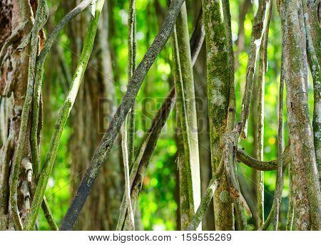 Green Tropical Rainforest. Green Background