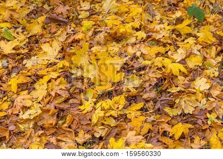 Taken on a walk in Hainault Forest in November. Background shot of autumn leaves on the ground.