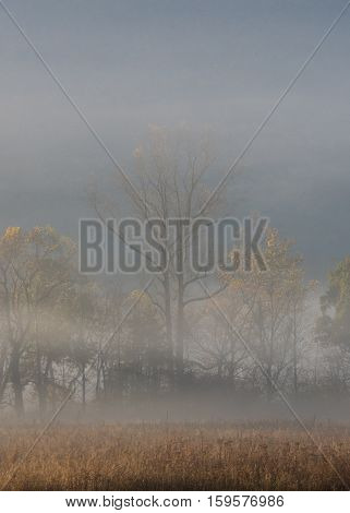 Foggy Valley Trees in Fall Behind Brown Field