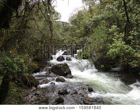 Wild Creek In Rain Forest In The Island Of Galapagos