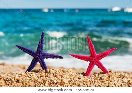Standing starfishes in different colors at the beach