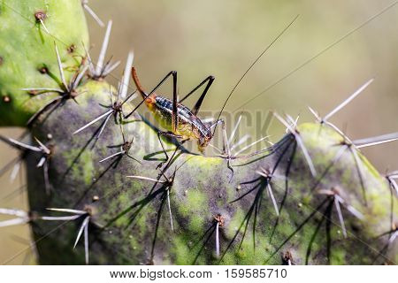 Katydids are found in Mexico. Similar to grasshoppers, you can find them in grasslands, prairies, meadow and other grassy or weedy areas, especially near swamps, creeks, and other damp areas
